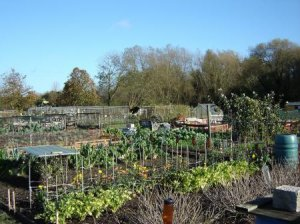 Parish Council trials Quarter sized Allotment Plots